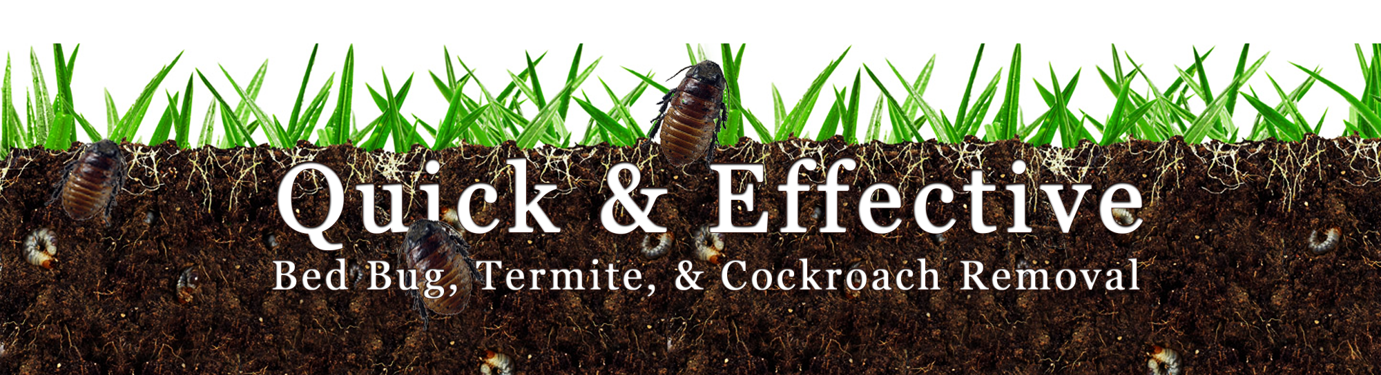 Quick & Effective Pest Control - York, PA