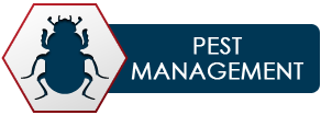 Pest Management - Pest Control Company